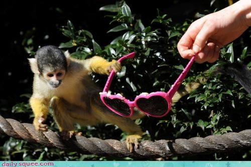 acting like animals diva fighting monkey Music pretentious rockstar sound squirrel monkey sunglasses touring upset - 4636184832