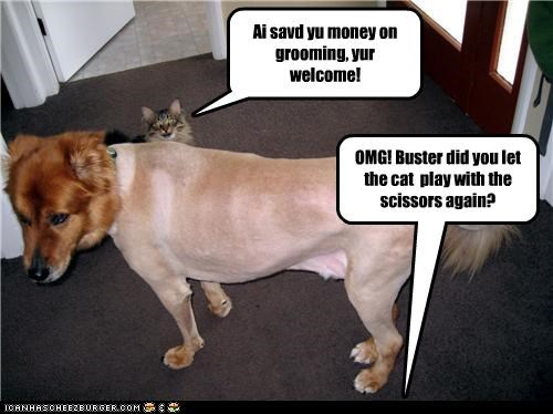 Ai savd yu money on grooming, yur welcome! OMG! Buster did you let the cat play with the scissors again?