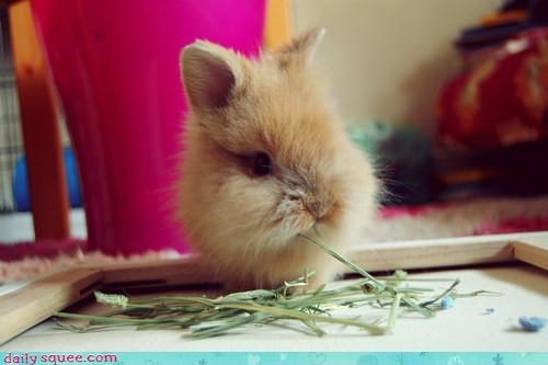 ä,baby,Bunday,bunny,carrot cake,happy,happy bunday,nomming,noms,nonplussed,quick,rabbit,suggestion,unimpressed