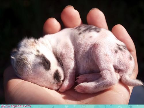 asleep baby bunny hand hands holding rabbit sleeping - 4636547072