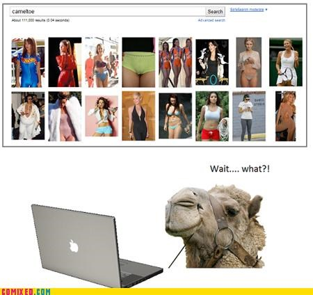 camel,cameltoe,confused,google,search