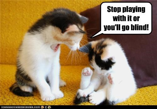 blind blinded caption captioned cat Cats consequence double meaning go innuendo kitten playing stop warning - 4638065920