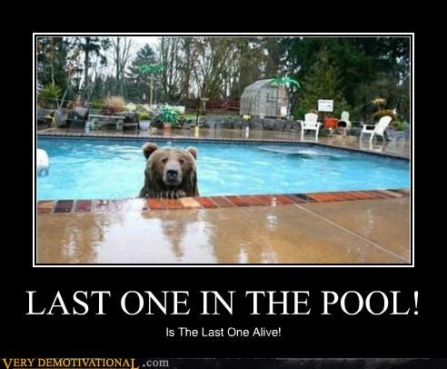 bad idea,bear,dead,pool