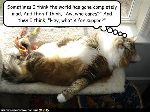 best of the week,caption,captioned,cat,Cats,deep thoughts,dinner,Hall of Fame,philosophy,thinking,thoughts,who cares