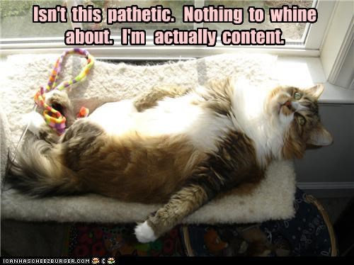 caption captioned cat confused content disappointed laying down nothing pathetic strange whine - 4641059072