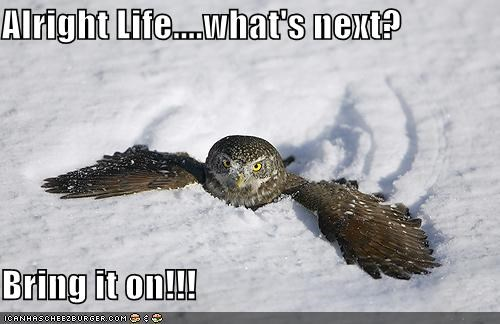 bring it on,caption,captioned,determined,fearless,indignant,life,next,Owl,persistent,question