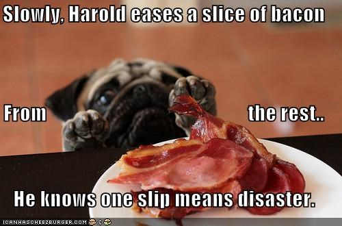 Slowly, Harold eases a slice of bacon From the rest.. He knows one slip means disaster.