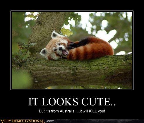 australia kill you red panda wtf - 4642438656