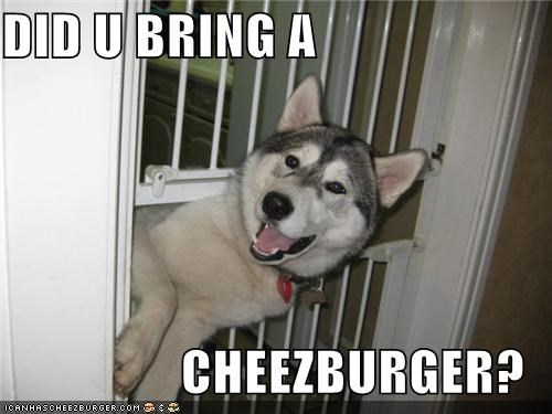 Cheezburger Image 4642484224