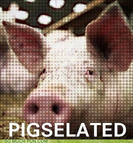 literalism pig pixel pixelated pixels similar sounding