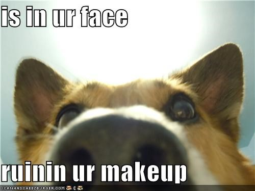 closeup,corgi,face,im-in-your,makeup,meme,memedogs,prefix,ruining,suffix