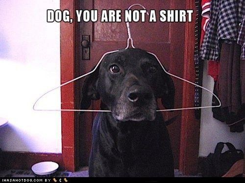 Black Lab hanger head lol shirt - 4644324096