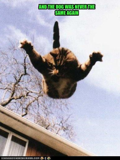 again ambush caption captioned cat consequence dogs jumping never outcome same surprise trauma