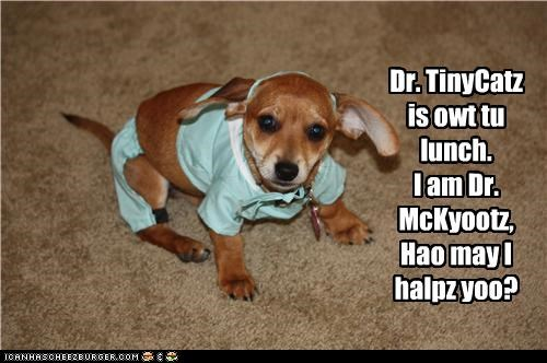 dr tinycat,help,lunch,out,question,replacement,scrubs,substitute,whatbreed