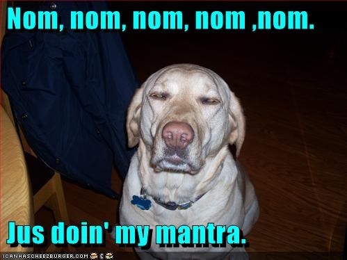 explanation labrador mantra meditating meditation nom