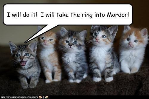 best of the week caption captioned cat Cats Hall of Fame I Can Has Cheezburger kitten Lord of the Rings mission mordor ring task volunteer - 4645154816