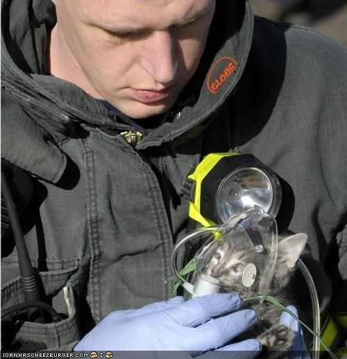 awesome best of the week fire firefighters hero kitten news rescue save - 4645267456