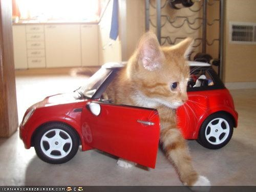 car cars cyoot kitteh of teh day driving mini cooper toys - 4645965824
