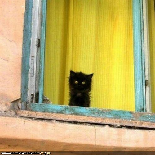black cat,curtains,cyoot kitteh of teh day,Fluffy,home,Sad,window