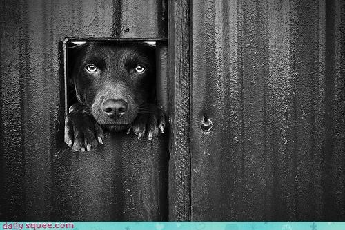 acting like animals dogs dog door door hole larger request size stuck suggestion