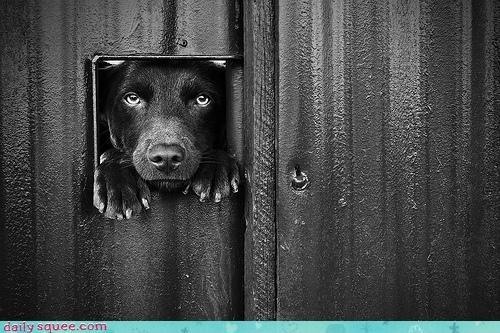 acting like animals dog door door hole request size stuck suggestion - 4646026752