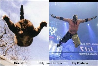 animals Cats Hall of Fame rey mysterio wrestlers wrestling wwe - 4646521856