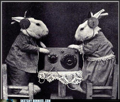 big brother is listening bunnies weird - 4646810112