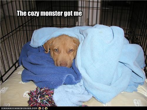blankets cozy cuddling explanation monster puppy resting swaddle swaddled victim whatbreed - 4647521024