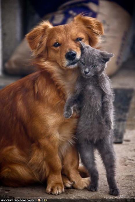 dogs goggies goggies r owr friends human-like Interspecies Love standing tall - 4647777280
