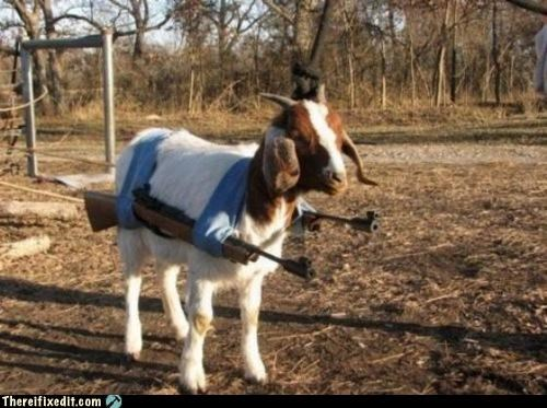 animals goat guns poll war weapons wtf - 4648167168
