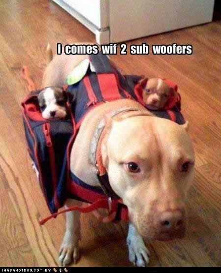 Babies carry goggie ob teh week pack pitbull puppies