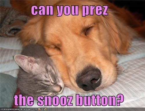 asking asleep button cat cuddling friends golden retriever kitten press question sleeping snooze snooze button snuggling