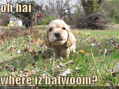 asking bathroom directions location ohai puppy question whatbreed where - 4649319680