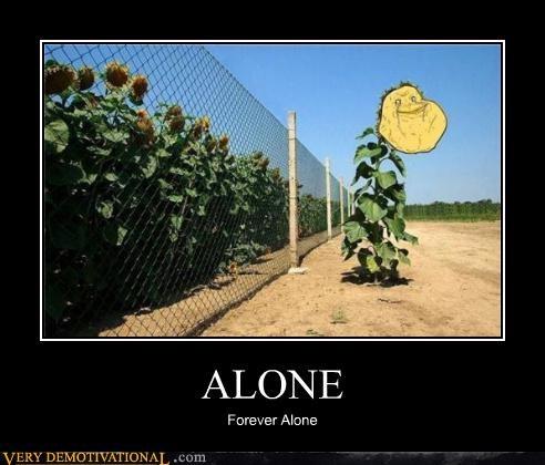 fence forever alone sunflower - 4649350144