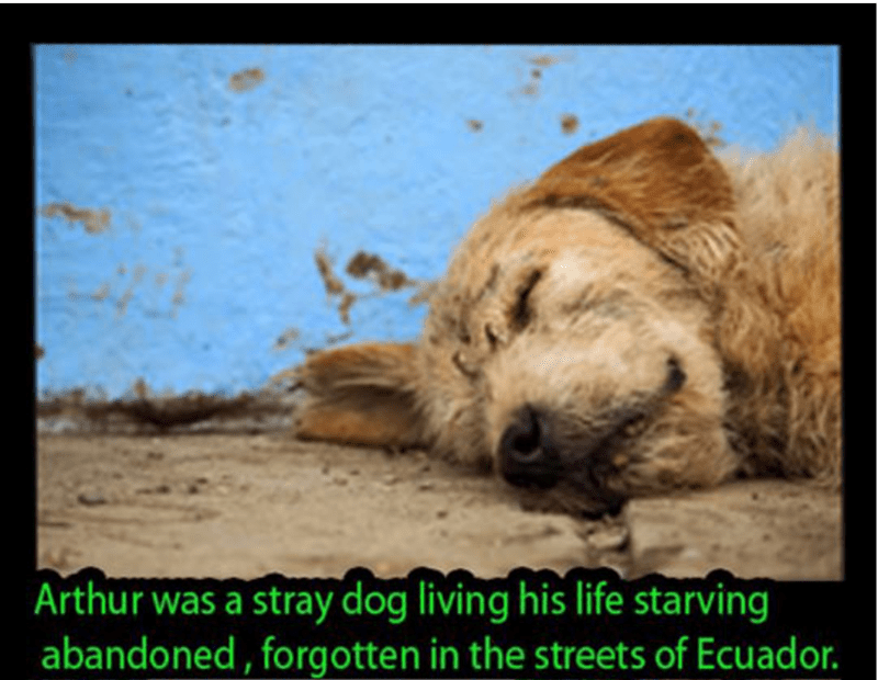 dogs cute celeb story funny - 4649477