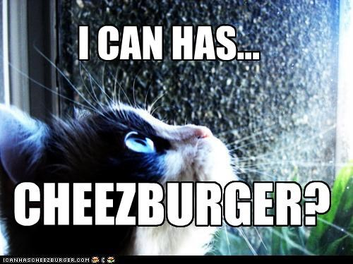 Cheezburger Image 4649484288