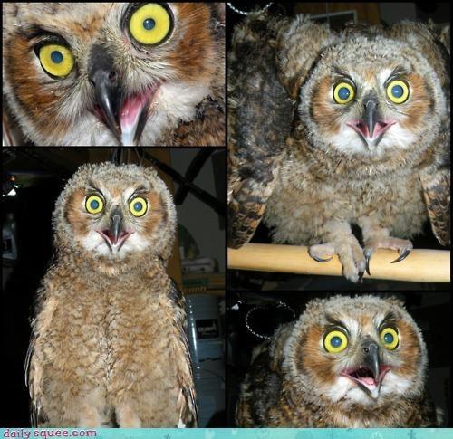 acting like animals advantage challenge comparison eyes hypnosis hypnotic - 4649570048