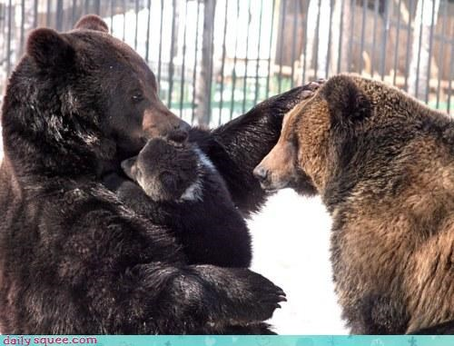 acting like animals allotment baby bear bears cub cuddling doting Father mother rigged son time - 4649587456