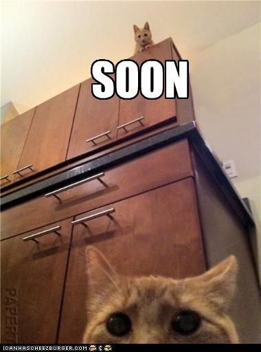 caption captioned cat Cats height SOON stalking surprise suspense - 4649619200