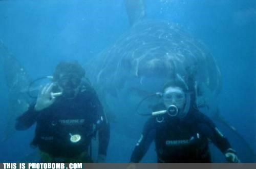 Animal Bomb,divers,scuba,shark