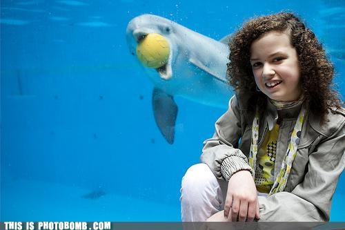 Animal Bomb aquarium ball dolphin sea world seal - 4650498816