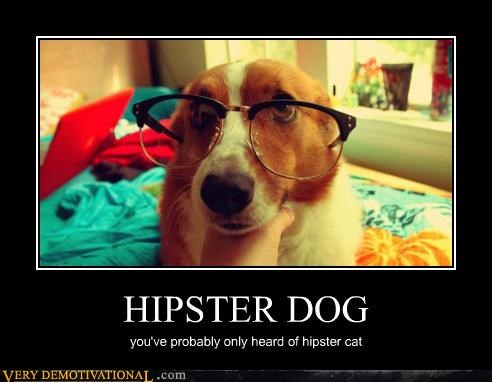 HIPSTER DOG you've probably only heard of hipster cat