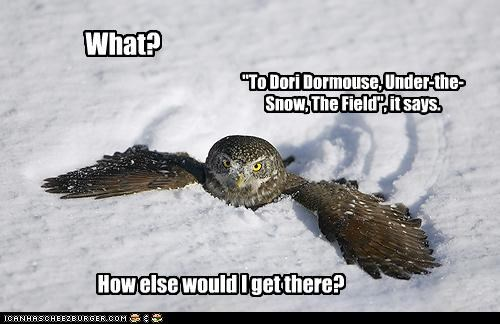 """What? """"To Dori Dormouse, Under-the-Snow, The Field"""", it says. How else would I get there?"""