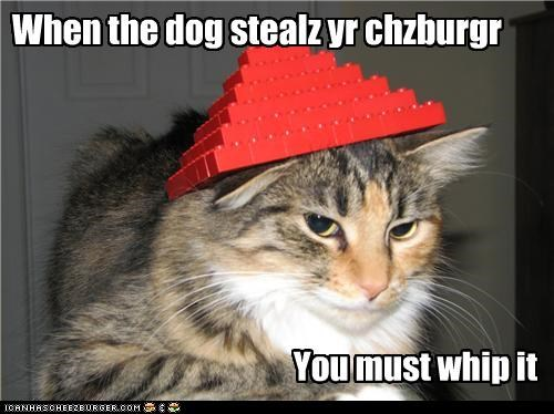 caption,captioned,cat,cheeseburger,Devo,do not want,dogs,hat,legos,lyrics,noms,parody,song,stealing,stolen,whip it