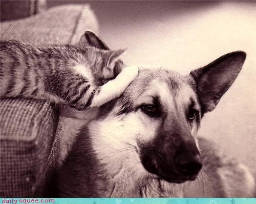 Cats,dogs,secrets,whispering