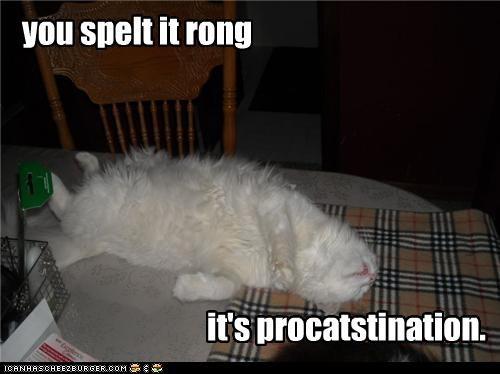 caption captioned cat correction incorrect procrastination pun sleeping spelling wrong - 4651907840