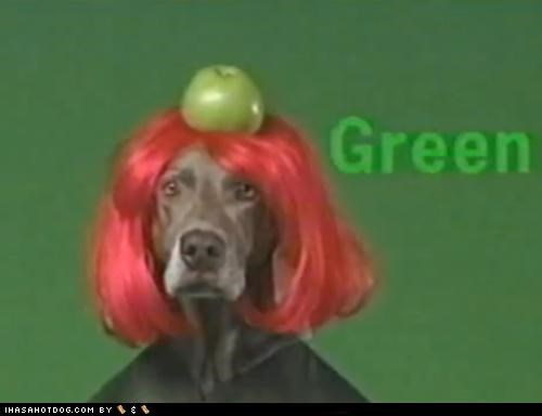 apple,green,hair,odd,red,weimeraner,wig
