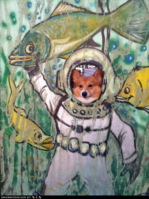 Carnival corgi cutout diver fish suit - 4652041728