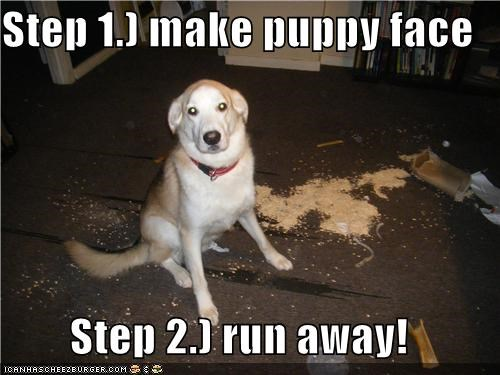 Funny meme of a dog giving advice how to get away with making trouble and it is not bad advice overall.