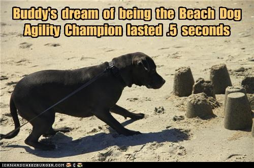 5 agility beach castle Champion dream duration FAIL labrador lasted ruined sand sandcastle seconds